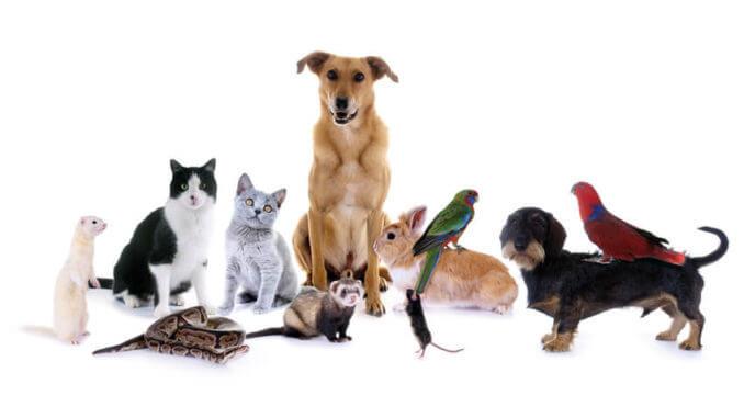 Tiere süße google bilder 39 Bilder