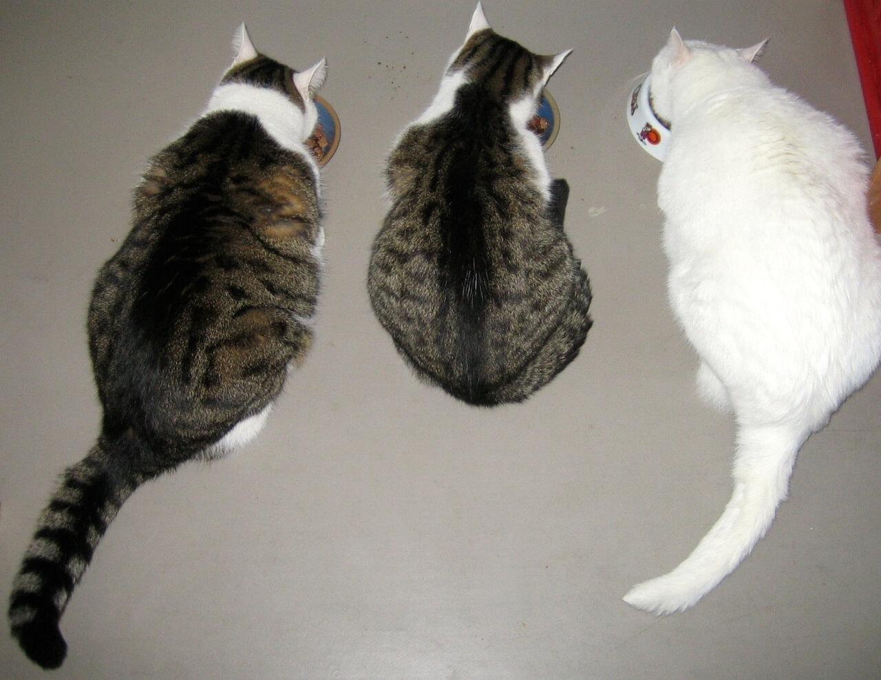 Trotz dünner katze fressen immer wird alte Katze zu