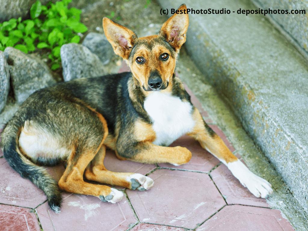 Ich bin meinem hund hilfe schwanger von [Download] Liebes