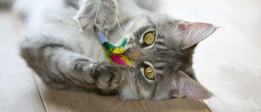 Vergleich: Die besten Katzenspielzeuge für Stubentiger