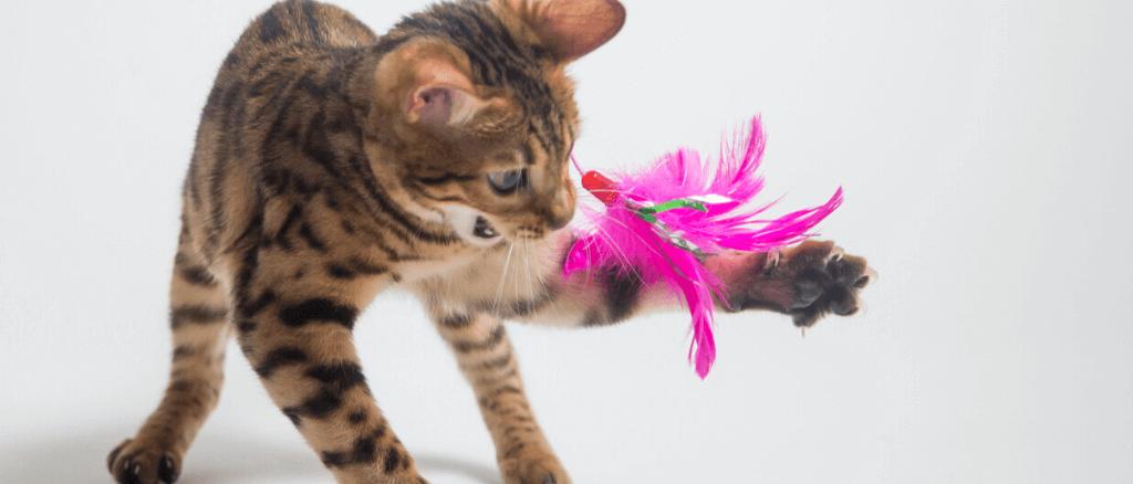 Vergleich: Die besten elektronischen Katzenspielzeuge